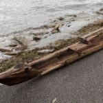 Historic Dugout Canoe Used Unveiled By Hurricane Irma